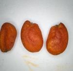 후피향나무